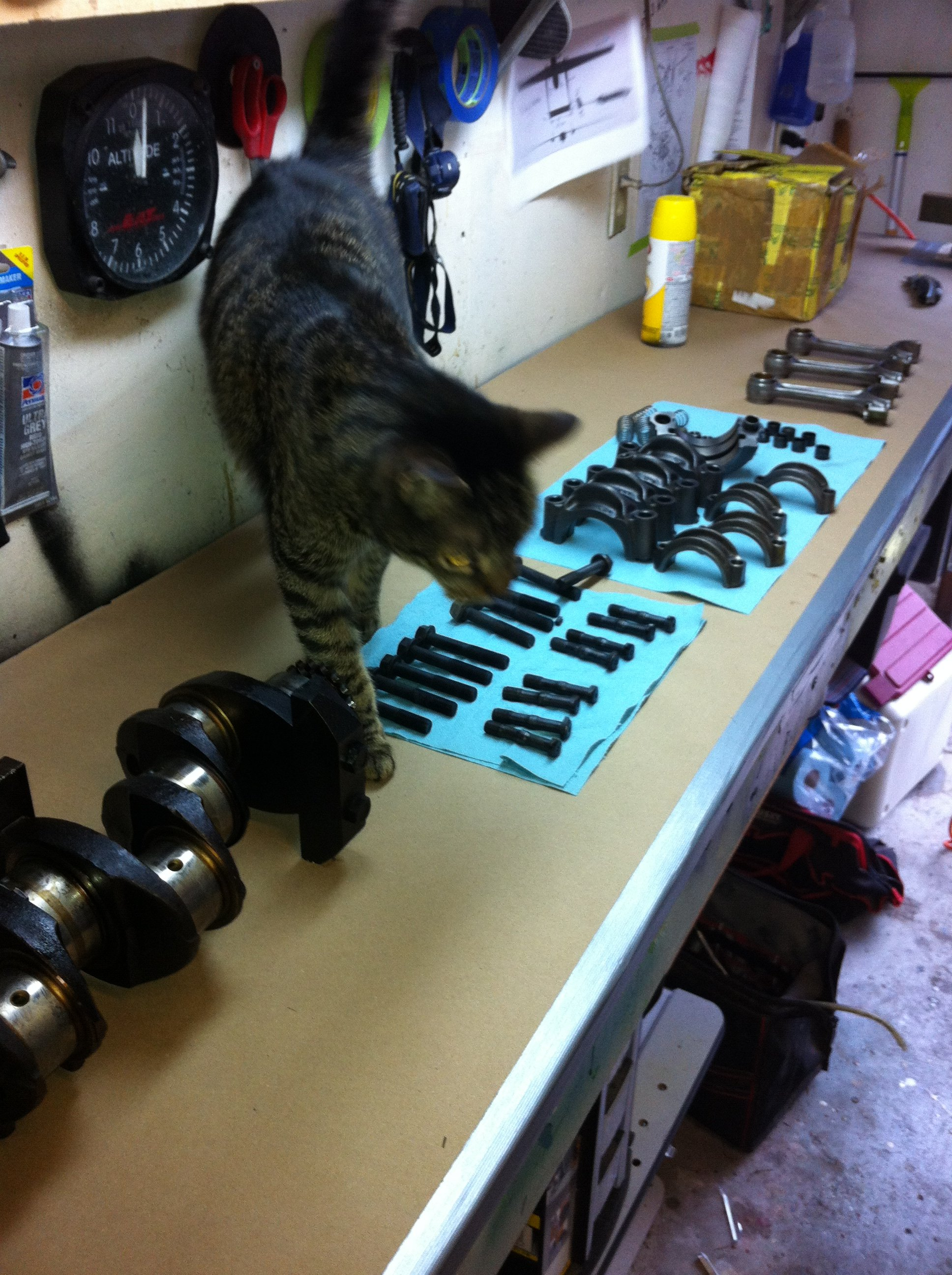 Tabby Cat comes down to inspect work in progress