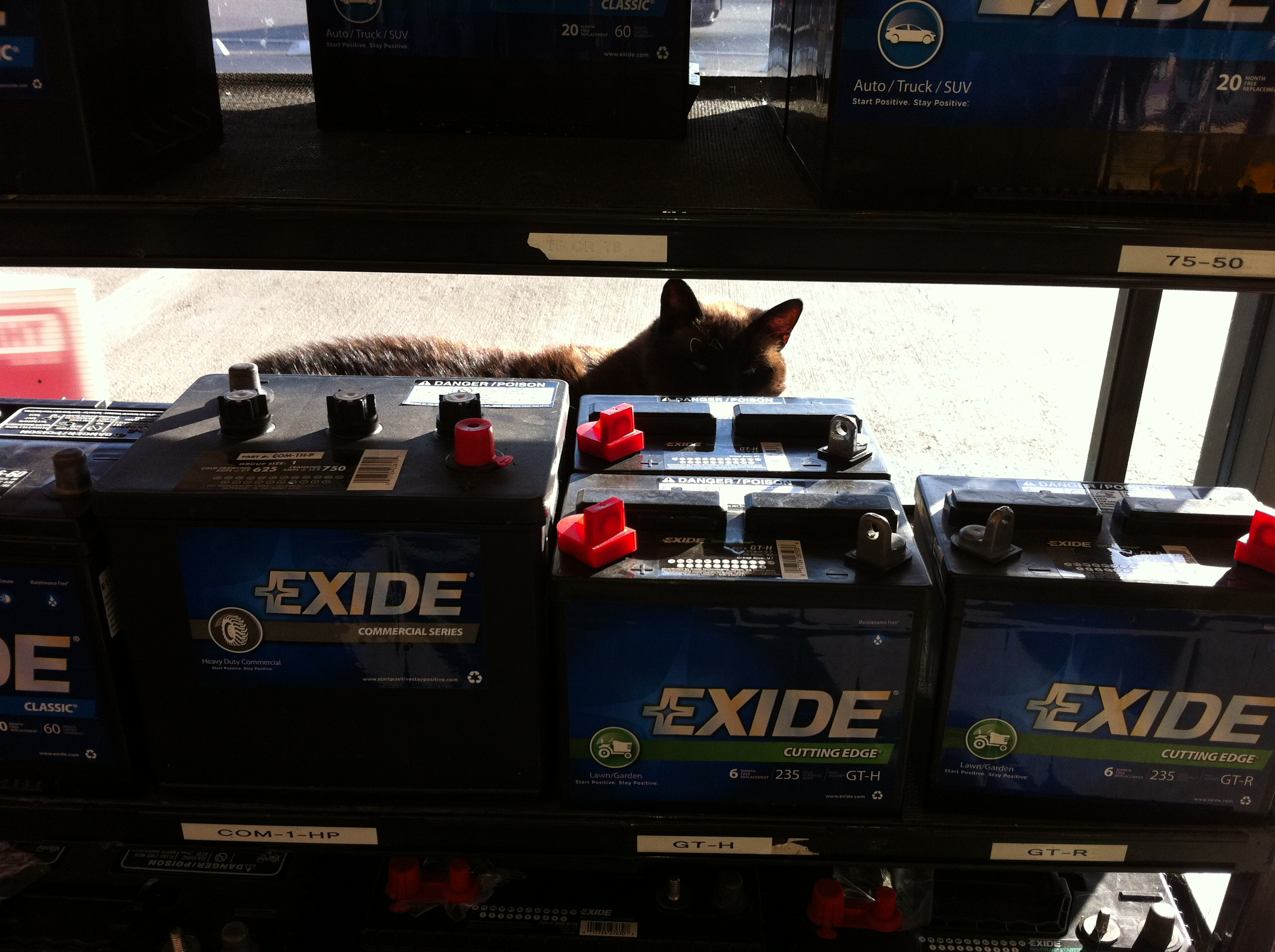 I go to the auto parts store to get a clutch alignment tool, fuel filter and some hose and I see Turbo the auto parts store security cat has staked out the warm sunny spot by the battery display rack. She's a big cat, at least 14 pounds and she's always there when I go in to get stuff.